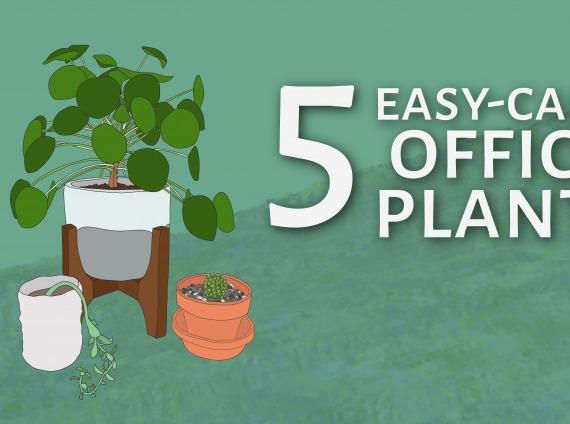 Plant Blog Header-01